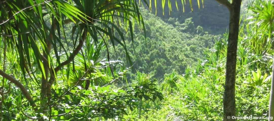 Hawaii Organic Green