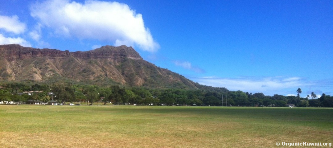 Kapiolani Park Diamond Head Organic Hawaii