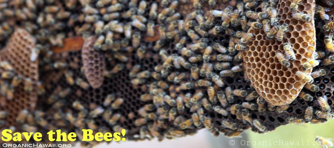 save the bees 1080 organic hawaii