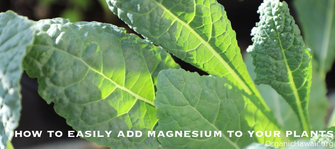 How to Add Magnesium to Garden Plants