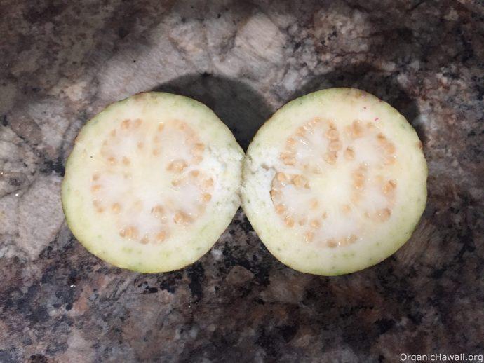 organic guava fruit