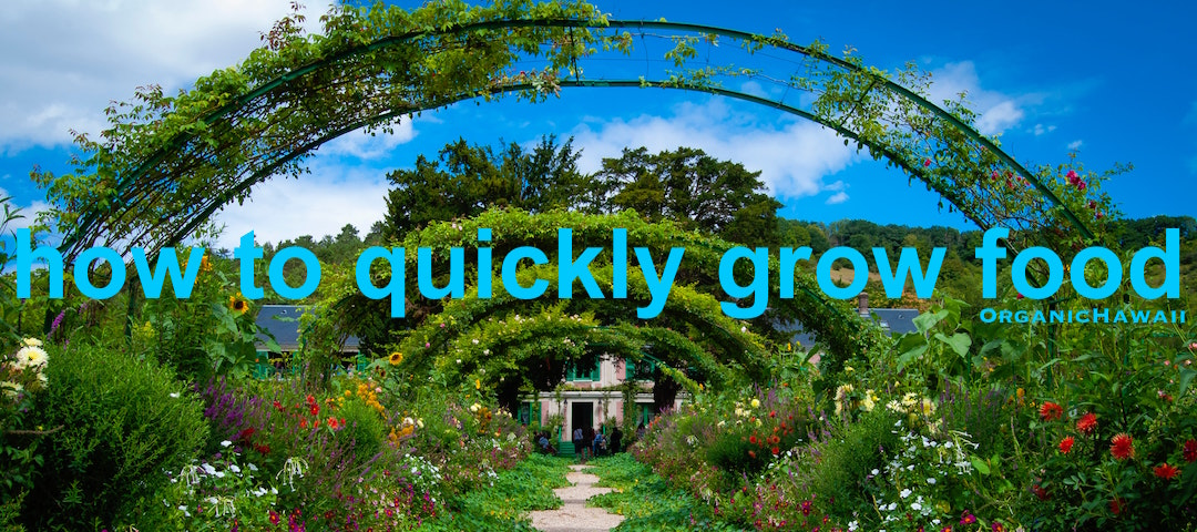 how to quickly grow food