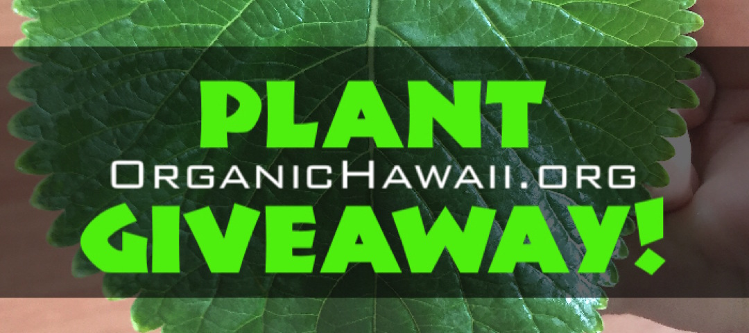 Organic Plant Giveaway contest